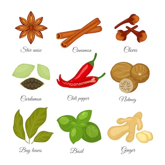 異なるスパイススターアニス、シナモン、クローブ、カルダモン、バジル、ナツメグ、唐辛子、生姜、月桂樹の葉のイラストが白で隔離のセット