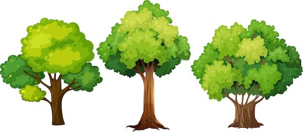 다른 나무 디자인의 세트