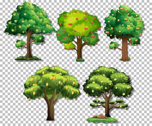 투명 한 배경에 다른 나무 세트