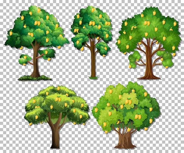 透明な背景に異なる木のセット