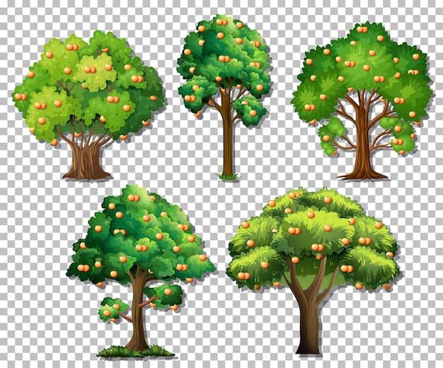 투명 한 배경에 다른 나무의 집합