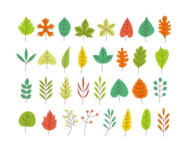 分離された異なるタイプと色の季節の葉のセット