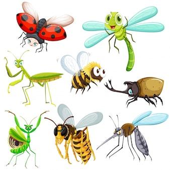 Набор различных видов насекомых