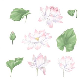 연꽃과 해초의 디지털 클립 아트 꽃과 꽃다발 세트