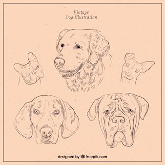 Набор собак в стиле винтаж Бесплатные векторы
