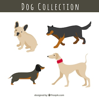 Set of dogs of different races