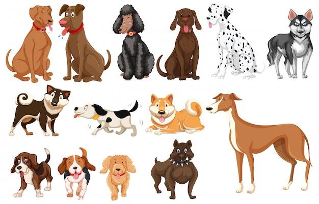 Набор собак белый фон