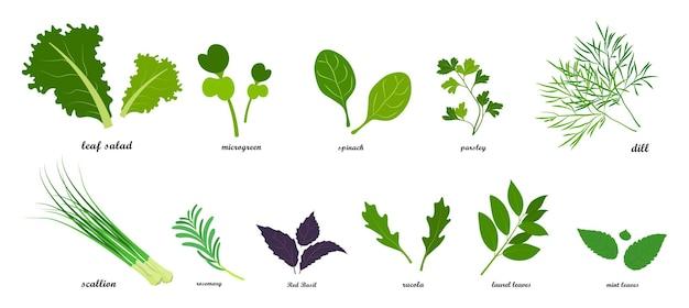Набор нарисованных зеленых листовых овощей для салатов в плоском стиле