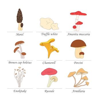 Набор съедобных грибов с названиями на белом фоне.