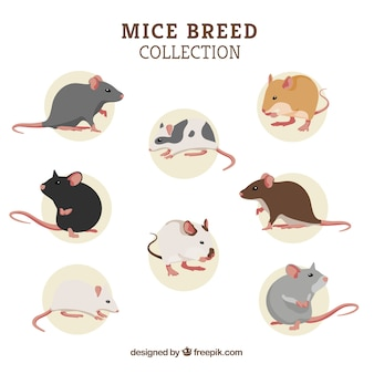 Set of eight mice breeds