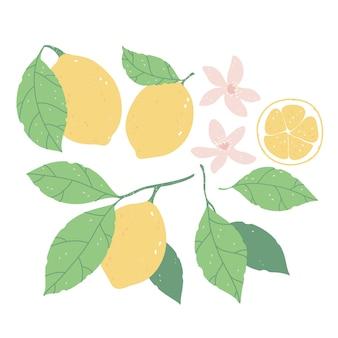 Набор элементов с ломтиками лимона, лимонами, зелеными листьями и розовыми цветами на белом фоне