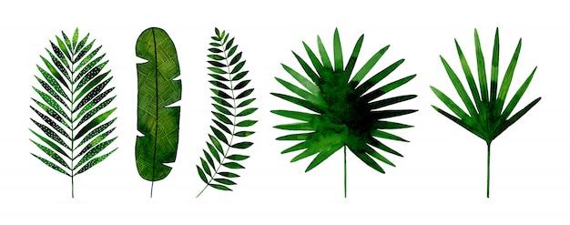 이국적인 열 대 잎 손 수채화로 그린 세트.