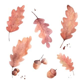 秋の茶色のオークの葉とどんぐりのセットです。秋の祭りで装飾的なデザインに最適な白い背景に分離されたイラスト水彩手描き。グリーティングカード、招待状、ポスター。