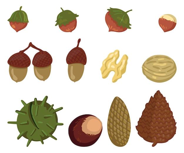 Набор осеннего урожая. векторные иллюстрации осеннего сезона. рисунки различных лесных орехов и шишек. коллекция мультяшных цветных клипартов, изолированные на белом фоне.