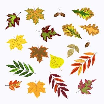 秋のナナカマド、ガマズミ属の木、オーク、葉、どんぐりのセット。ハロウィーン、感謝祭、秋のシンボル。
