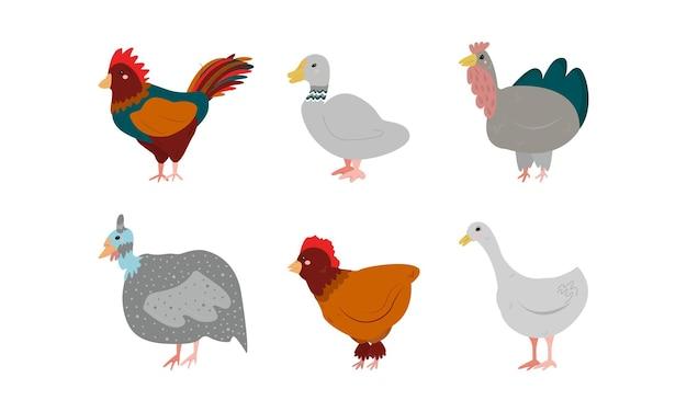 白い背景で隔離の農場の鳥のセットです。バードファーム。七面鳥、鶏肉、アヒル、ホロホロチョウ、オンドリ、ガチョウの漫画のシンプルなフラットスタイル。ベクトルイラスト。