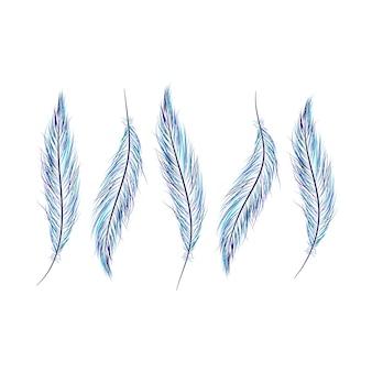 羽のセットは、白い背景に手描きです。