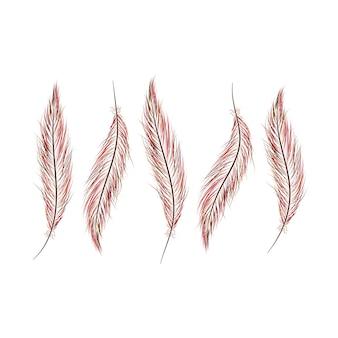 Набор перьев нарисован вручную на белом фоне.