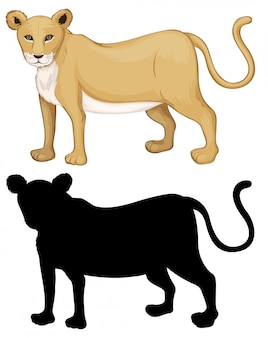 雌のライオンキャラクターのセット