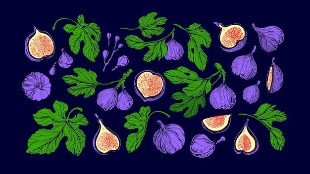 Набор инжира, изолированные на фиолетовый