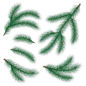 Набор еловой ветки на белом фоне. иллюстрация