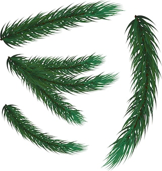 モミの枝のセット。新年の装飾、装飾。クリスマスのモミ、モミ、松。メリークリスマス、そして、あけましておめでとう。