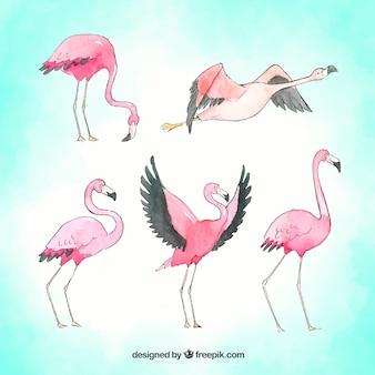 Набор фламинго в разных позах
