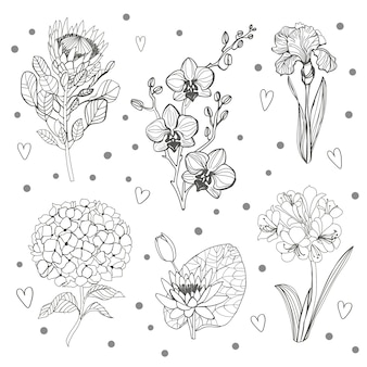 꽃 지점의 집합입니다. 꽃 개요 hortenzia, orhid, 홍채, protea 및 녹색 잎.