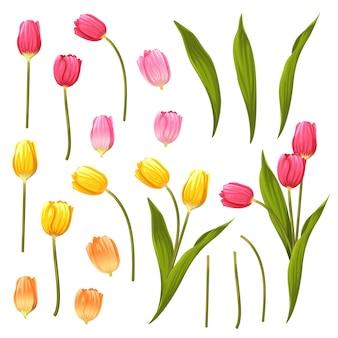 꽃 요소 집합입니다. 꽃과 녹색 잎.
