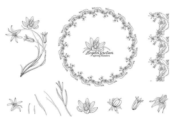Lloydia serotina 꽃의 꽃 요소 집합