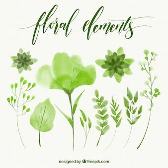 花の緑の水彩画の要素のセット