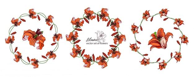 릴리의 꽃 봉 오리에서 꽃 화 환 세트. 오렌지 릴리. 프리미엄 벡터