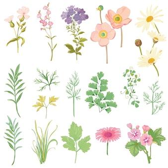 花とハーブのセット-手描きの水彩風