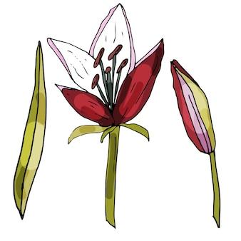 孤立した白い背景に咲く蘭の花のセット輪郭は手描きです