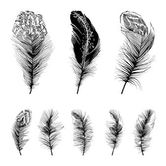 4つのまっすぐな羽のセット。