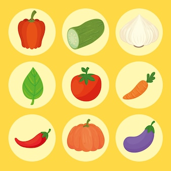 Набор свежих и полезных овощей