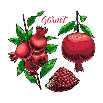 Набор свежего и сочного граната с семенами. рисованной иллюстрации