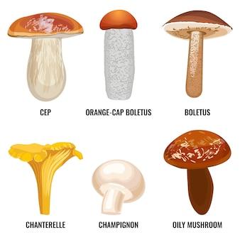 真菌やキノコのセットは、白い背景の上のイラストをベクトルします。セップポルチーニ、オレンジキャップのポルチーニ、アンズタケ、おいしいシャンピニオン、オイリーマッシュルーム