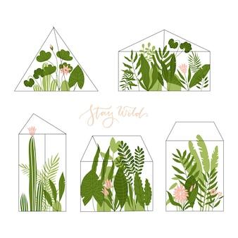 열대 식물 즙과 선인장이 있는 기하학적 유리 테라리움 세트 현대적인 가정 장식