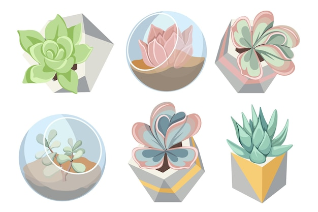 多肉植物、小さな家の庭、屋内のdiyコンテナ、透明なボール、花を育てる幾何学的な鉢を備えたガラスとコンクリートのフローラリウム花瓶のセット。漫画のベクトル図
