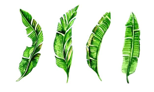 緑のバナナの木の葉の水彩デザインのセット