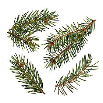 Набор зеленых ветвей елки, изолированные на белом фоне.