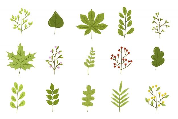 Набор зеленых листьев, изолированных
