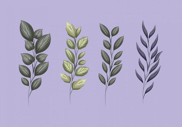 Набор зеленых листьев, живопись, дизайн, цветочная природа, растение, сад, орнамент, ботаника, украшение и иллюстрация темы жизни