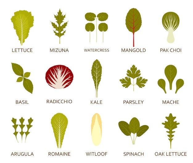 白で隔離の緑のサラダの葉のセット