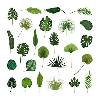 Набор зеленых тропических листьев