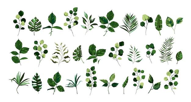 緑の葉と小枝のセット