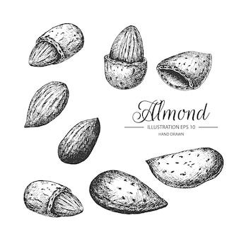 손으로 그린 아몬드의 집합입니다.