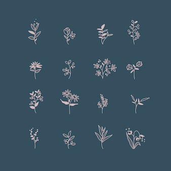 Набор рисованной ботанических элементов вектора