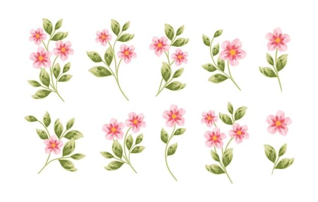 Набор рисованной ботанических цветов пиона и элементов листьев